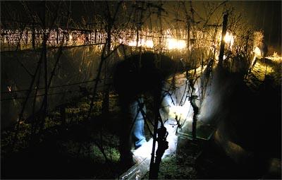 2007-12-20-eisweinernte.jpg