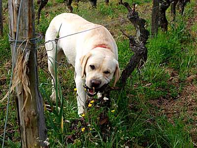 2009-04-16-rodehund.jpg