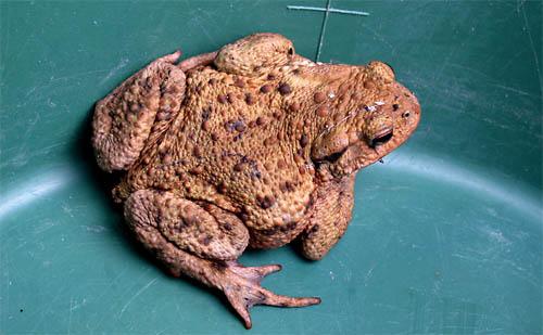 2010-09-08-frosch.jpg