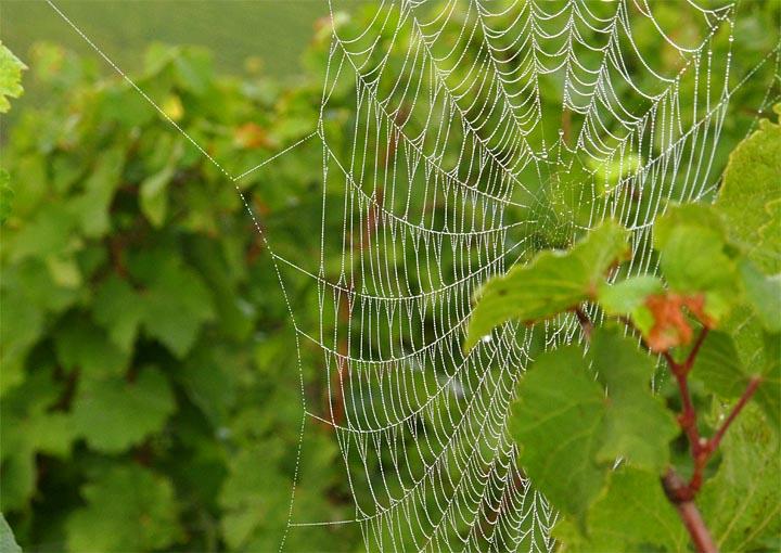 2015-10-06 Spinnennetz